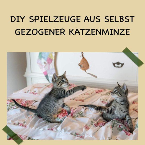 Katzenkräuter Katzengarten Katzenbalkon Pflanzen für Katzen Geschenk Set Pflanzschilder