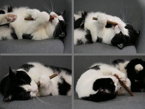 Matatabi Katzenminze Zahnpflege für Katzen
