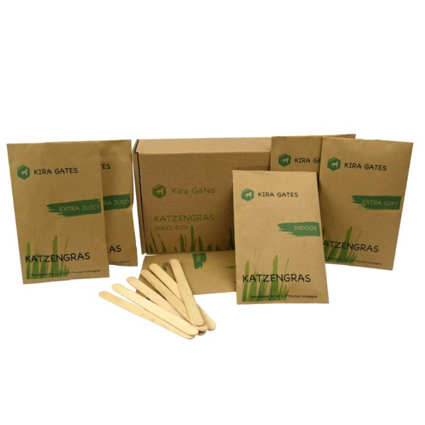 Katzengras Box weich soft indoor für innnen geeignet